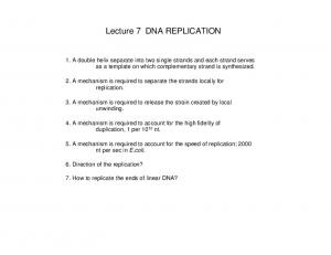 Lecture 7 DNA REPLICATION