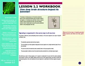 LESSON 2.2 WORKBOOK How does brain structure impact its function?