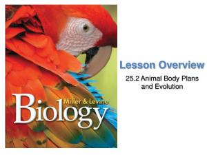 Lesson Overview. Animal Body Plans and Evolution. Lesson Overview Animal Body Plans and Evolution