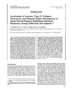Localization of Laminin, Type IV Collagen,