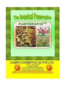 Lonicera Caprifolium. Lonicera Japonica in flowering buds. Lonicera Japonica Plant