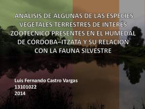 Luis Fernando Castro Vargas