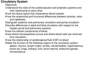 Major divisions of the circulatory system Cardiovascular system Lymphatic system