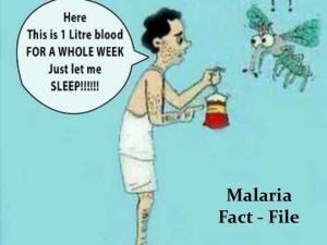 Malaria Fact-file. Malaria Fact - File