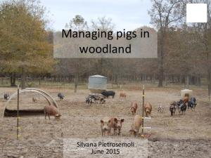 Managing pigs in woodland