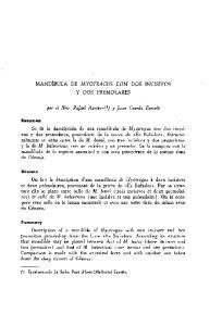 MANDfBULA DE MYOTRAGUS CON DOS INCISIVOS Y DOS PREMOLARES