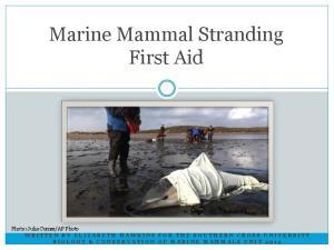 Marine Mammal Stranding First Aid