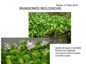Martes, 31 Mayo 2016 INVASIONES BIOLOGICAS. jacinto de agua o camalote Eichhornia crassipes una especie exótica invasora en medio mundo