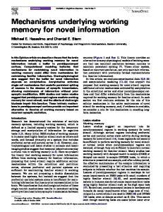 Mechanisms underlying working memory for novel information