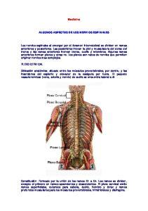 Medicina ALGUNOS ASPECTOS DE LOS NERVIOS ESPINALES