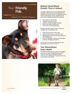 Medium-Sized Mixed Breeds: They re Unique! Your Mixed-Breed Dog s Health
