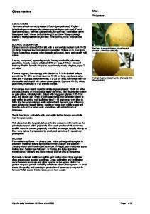 Merr. Rutaceae. Citrus maxima