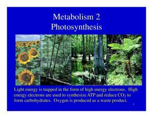 Metabolism 2 Photosynthesis