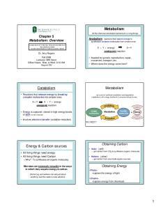 Metabolism: Catabolism. Metabolism. Energy & Carbon sources. Chapter 5 Metabolism: Overview. Obtaining Carbon. Obtaining Energy