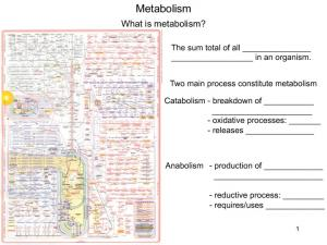 Metabolism. What is metabolism? The sum total of all in an organism. Two main process constitute metabolism. - oxidative processes: - releases