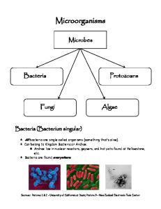 Microorganisms. Microbes