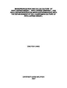 MICROPROPAGATION AND CALLUS CULTURE OF PHYLLANTHUS NIRURI