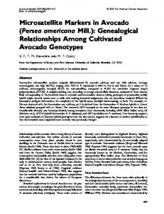 Microsatellite Markers in Avocado (Persea americana Mill.): Genealogical Relationships Among Cultivated Avocado Genotypes