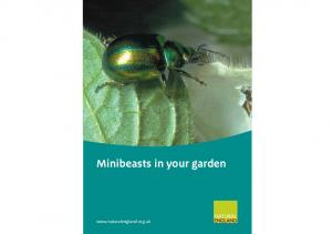 Minibeasts in your garden