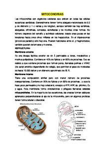 MITOCONDRIAS ESTRUCTURA: Membrana externa Membrana interna crestas mitocondriales