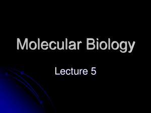Molecular Biology. Lecture 5