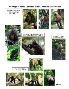 Monkeys of Barro Colorado Island, Panama Information