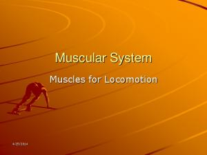 Muscular System. Muscles for Locomotion