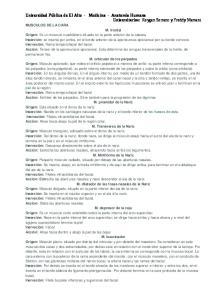 MUSCULOS DE LA CARA M