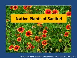 Native Plants of Sanibel