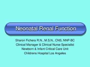 Neonatal Renal Function