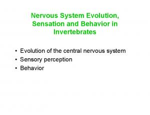 Nervous System Evolution, Sensation and Behavior in Invertebrates. Evolution of the central nervous system Sensory perception Behavior
