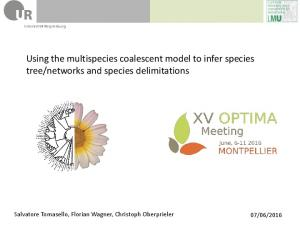 networks and species delimitations