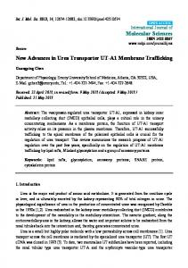 New Advances in Urea Transporter UT-A1 Membrane Trafficking