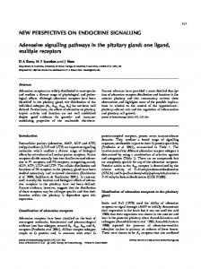 NEW PERSPECTIVES ON ENDOCRINE SIGNALLING. Adenosine signalling pathways in the pituitary gland: one ligand, multiple receptors