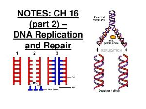 NOTES: CH 16 (part 2) DNA Replication and Repair