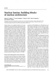 Nuclear lamins: building blocks of nuclear architecture