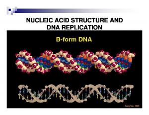 NUCLEIC ACID STRUCTURE AND DNA REPLICATION
