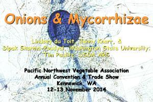 Onions & Mycorrhizae