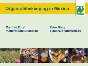 Organic Beekeeping in Mexico