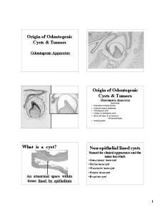 Origin of Odontogenic Cysts & Tumors. Origin of Odontogenic. What is a cyst?