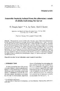 Original article. Anaerobic bacteria isolated from the alimentary canals of alfalfa leafcutting bee larvae