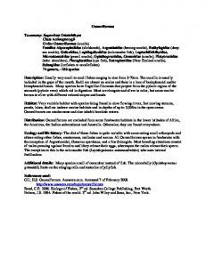 Osmeriformes Taxonomy: Superclass Osteichthyes Class Actinopterygii Order Osmeriformes Families Alpocephalidae