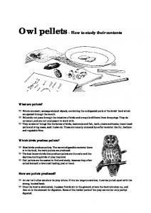 Owl pellets - How to study their contents