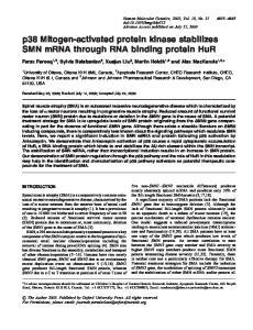 p38 Mitogen-activated protein kinase stabilizes SMN mrna through RNA binding protein HuR