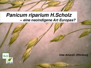 Panicum riparium H.Scholz eine neoindigene Art Europas? Uwe Amarell, Offenburg