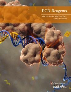 PCR Reagents POLYMERASES, NUCLEOTIDES, & DNA LADDERS