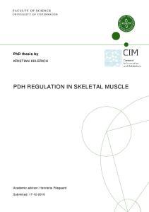 PDH REGULATION IN SKELETAL MUSCLE