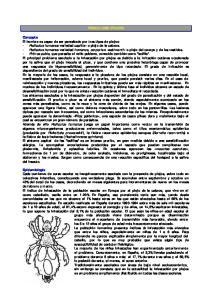 PEDICULOSIS (PIOJOS)