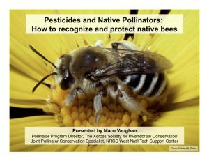 Pesticides and Native Pollinators: How to recognize and protect native bees