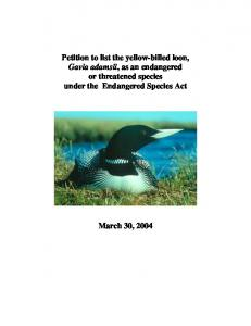 Petition to list the yellow-billed loon, Gavia adamsii, as an endangered or threatened species under the Endangered Species Act